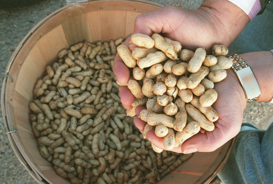 More on New Pediatric Peanut Allergy Study