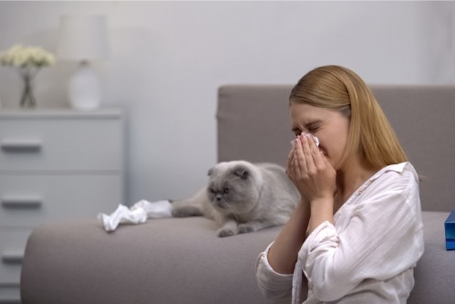 How To Limit Pet Dander To Avoid Allergies