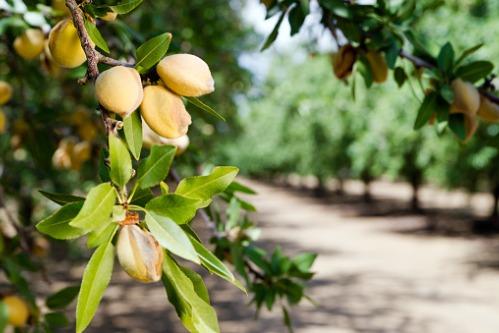 Understanding-tree-nut-allergies